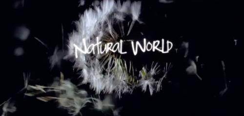 natural-world-youtube
